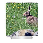 Common Hare Shower Curtain