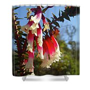 Common Heath Shower Curtain
