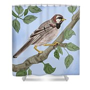 Common House Sparrow Shower Curtain