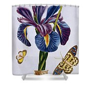 Common Iris With Butterflies Shower Curtain