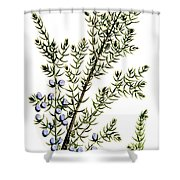 Common Juniper Alchemy Plant Shower Curtain