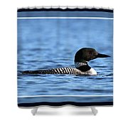 Common Loon, Framed Shower Curtain
