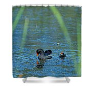 Common Moorhen And Her Baby Shower Curtain