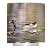 Common Moorhen Shower Curtain