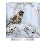 Common Redpoll - Hello Shower Curtain