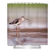 Common Redshank Tringa Totanus Shower Curtain