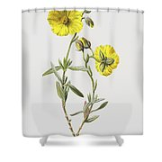Common Rock Rose Shower Curtain