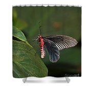 Common Rose Butterfly Shower Curtain
