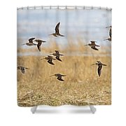 Common Snipe Shower Curtain