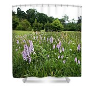 Common Spotted Orchids Shower Curtain