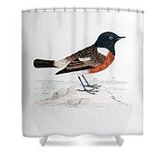 Common Stonechat Illustration Shower Curtain