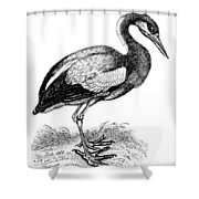 Common Stork Shower Curtain
