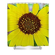 Common Sunflower In Northwest North Dakota Shower Curtain