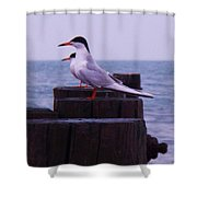 Common Tern Sterna Hirundo Shower Curtain