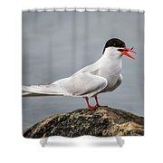Common Tern Shower Curtain