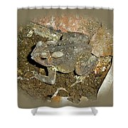 Common Toad - Bufo Americanus Shower Curtain