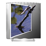 Common Whitetail Shower Curtain