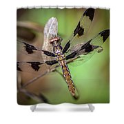 Common Whitetail Dragonfly Shower Curtain
