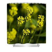 Common Wintercress Flowers Shower Curtain