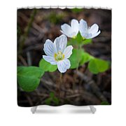 Common Wood Sorrel Shower Curtain