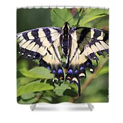 Common Yellow Swallowtail Shower Curtain
