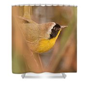 Common Yellow-throat In Hiding Shower Curtain