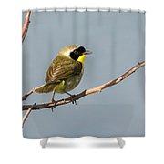 Common Yellowthroat Shower Curtain