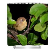 Common Yellowthroat Warbler Shower Curtain