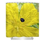 Complementary Colors Shower Curtain