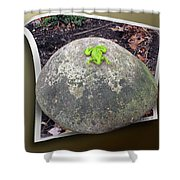 Concrete Toad Stool Shower Curtain