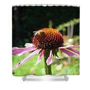 Cone Flower And Honey Bee Shower Curtain