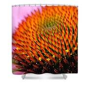 Cone Flower Closeup Shower Curtain