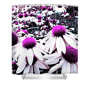 Cone Flower Delight Shower Curtain by Kevyn Bashore