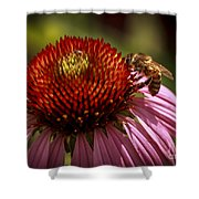 Coneflower Bee Shower Curtain
