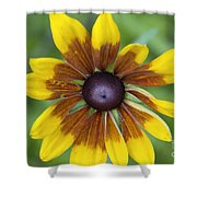 Coneflower - New England Wild Flower Shower Curtain