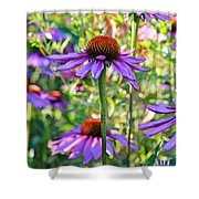 Coneflower Pedals Shower Curtain