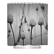 Coneflower Seedheads Covered In Snow Shower Curtain