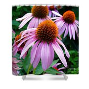 Three Coneflowers  Shower Curtain