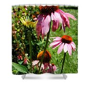 Coneflowers In Garden Shower Curtain