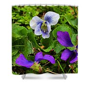 Confederate And Purple-blue Violets Shower Curtain