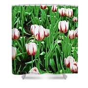 Confederation Tulips Shower Curtain