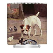 Confrontation Shower Curtain by Alfred Duke