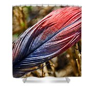 Congo African Grey Feather Shower Curtain