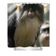 Congo Monkey2 Shower Curtain