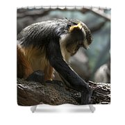 Congo Monkey3 Shower Curtain