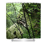 Conkle's Hollow Stone Arch Shower Curtain