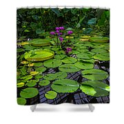 Conservatory Waterlilies Shower Curtain