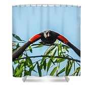 Contact Sports Shower Curtain