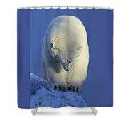 Contemplation Polar Bear Shower Curtain