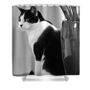 Contemplative Cat Black And White Shower Curtain